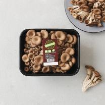 느타리 버섯(500G)