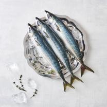 국산 생물 고등어(마리)