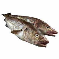 국산 대구 특대 (해동)(마리)