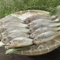 국산 백조기 (해동/대)(마리)
