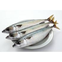 국산 고등어 (특대, 해동)(마리)