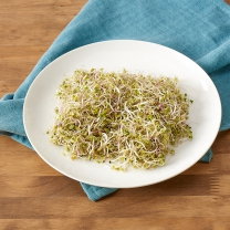 친환경 비빔밥용 새싹(40G)