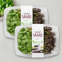 프리미엄 친환경 샐러드(Family)(80G*2팩)