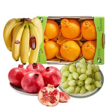비타민 가득<br>한라봉/석류/사과