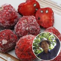 [산지직송] 경남밀양 이태우님의 꾸지뽕 3kg(1kg*3팩)