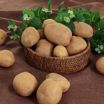 [아침애향]싱싱채소 감자1kg