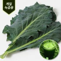 청주 송재혁님의 유기농 케일 1kg
