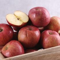 맛있는 사과 8kg(45과내/혼합)-가정용/흠과