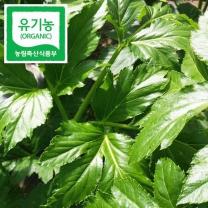 (인빌푸드)치악산 유기농 신선초(녹즙용) 1kg
