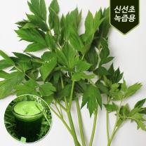 청주 송재혁님의 유기농 신선초 1kg