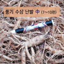 (인빌푸드)풍기수삼 난발 중 4-5년근 750g/7-10편