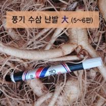 (인빌푸드)풍기수삼 난발 대 4-5년근 750g/5-6편