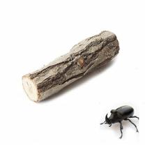 [바보사랑]국산 곤충 놀이목 - (장수풍뎅이 사슴벌레 놀이목)