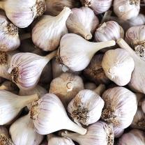 씨알이 단단한 의성 마늘 中 반접 (50개)