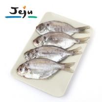 [제주푸드] 손질한 제주 샛돔(돌병어, 500g이상, 4~5마리)