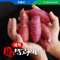 [영산포농협/산지직송] 2018년 세척 햇 밤고구마 5kg(한입)