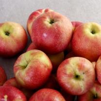 맛있는 사과 10kg(50과내) 가정용