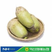 [익산원예농협/산지직송] 무 3kg(1-3개입)