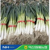 [익산원예농협/산지직송] 대파 4kg
