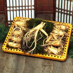 [풍기인삼] 5년근 수삼 1채 500g (15-17뿌리)