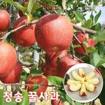 (인빌푸드)청송 주왕산 꿀사과(부사) 8kg/29-32과
