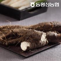 [동횡성농협] 강원도 더덕 800g×5 (생더덕)
