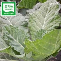 (인빌푸드)치악산 유기농 케일 2kg