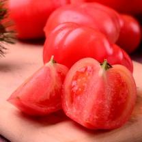 찰 토마토 5kg 1-2번 대과