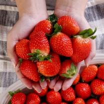 달콤한 산청 딸기 1kg(중품)