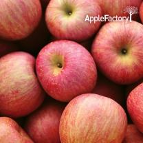 [애플팩토리] 알뜰(가정용) 사과 4.5kg (18~24과)