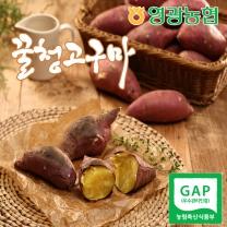 [영광농협/산지직송] 꿀청고구마 5kg(특상중)