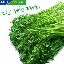 [노안농협] 세척 미나리 1kg