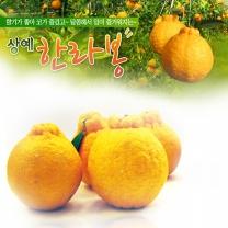 (인빌푸드)서귀포 상예 한라봉 3kg(6-8과)
