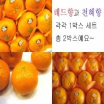(인빌푸드)로하스 레드향+천혜향세트 10kg