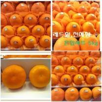 (인빌푸드)로하스 레드향+천혜향세트 5kg(12-20과)