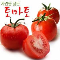 자연을 닮은 전라도 토마토 정품 3kg (4-5번과)