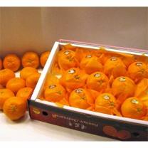(인빌푸드)서귀포 로하스 레드향 3kg(13-16과)
