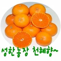 (인빌푸드)성한농장 꼬마천혜향 (가정용) 10kg