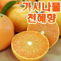 (인빌푸드)가시나물 천혜향 3kg(9~15과)