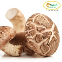 신선한 표고버섯(특) 2kg / 500g x 4봉
