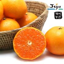 [깨비농원] 천혜향(중) 2.5kg (10~14과)
