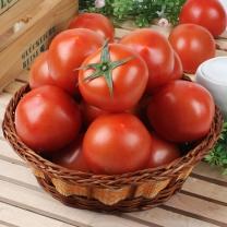 [가락24]자연의선택 완숙 토마토 5kg/3-4번과