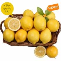 [가락24]자연의선택 썬키스트 팬시레몬 10kg/83과내외