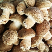 (인빌푸드) 영주 송이표고버섯 중품 1kg