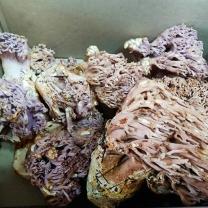 (인빌푸드)자연산 싸리버섯 2kg