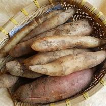 (인빌푸드)솔향기 야콘(가정용) 3kg
