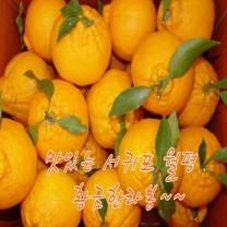 (인빌푸드)황금 한라봉 10kg(45~55과)