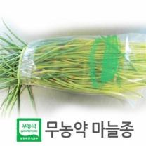 (인빌푸드) 창녕 무농약 마늘종 3kg
