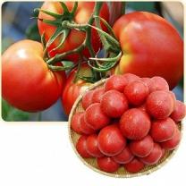 (인빌푸드)술빛愛 토마토 10kg