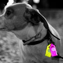 [바보사랑]REFLECTOR DOG NAME TAG